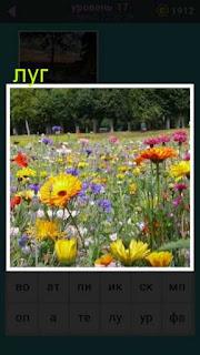 изображение красивого луга с цветами в игре 667 слов 17 уровень