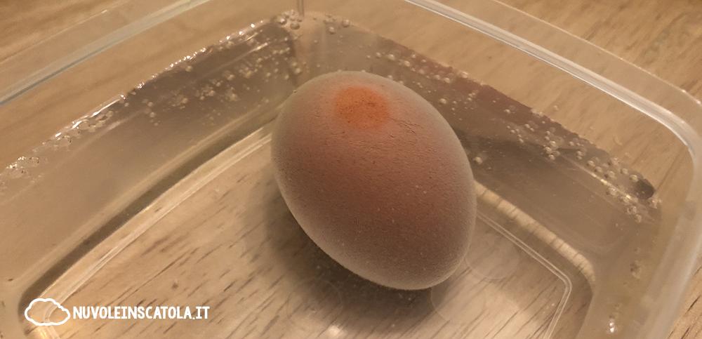 esperimento guscio uovo