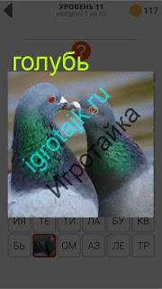 сидят два голубя вместе клюв к клюву 11 уровень 400 плюс