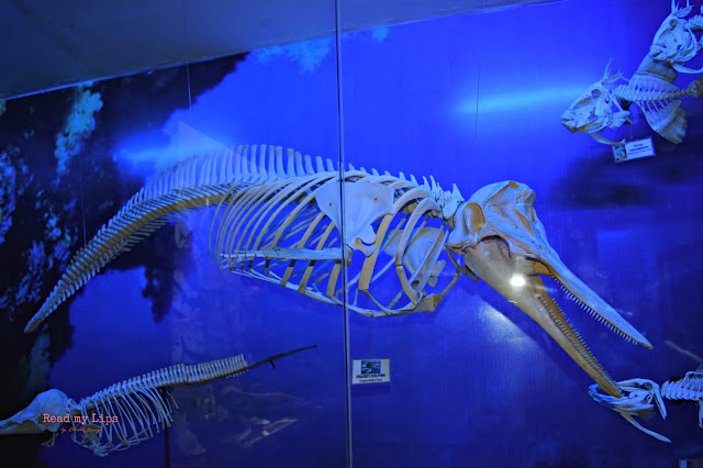 Fraser's Dolphin Bones