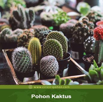 ciri ciri pohon kaktus