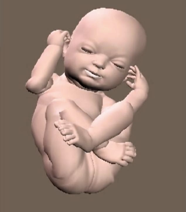 3D- Babies-1