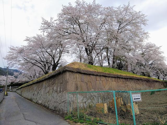 龍岡城 五稜郭 桜