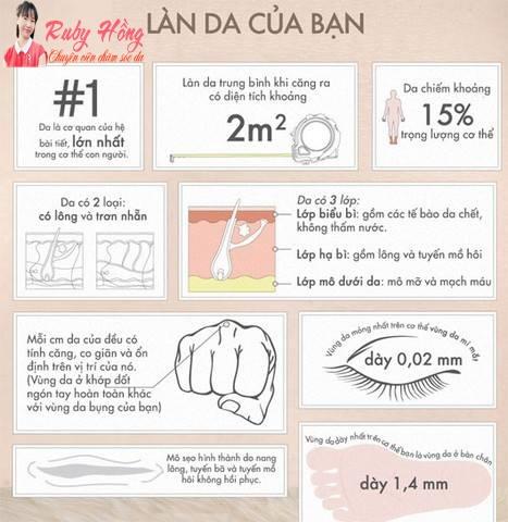 Những điều thú vị về làn da bạn nên biết .