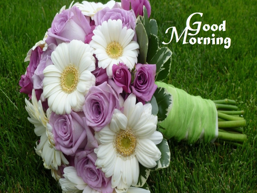 Good morning flowers images 45 wallpapers pics for dp hd free download good morning flowers wallpapers izmirmasajfo
