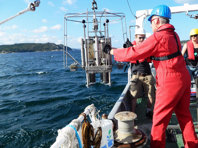 How nutrients are removed in oxygen-depleted regions of the ocean