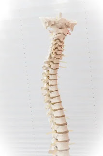 Spine Cord Ending- by www.physioscare.com