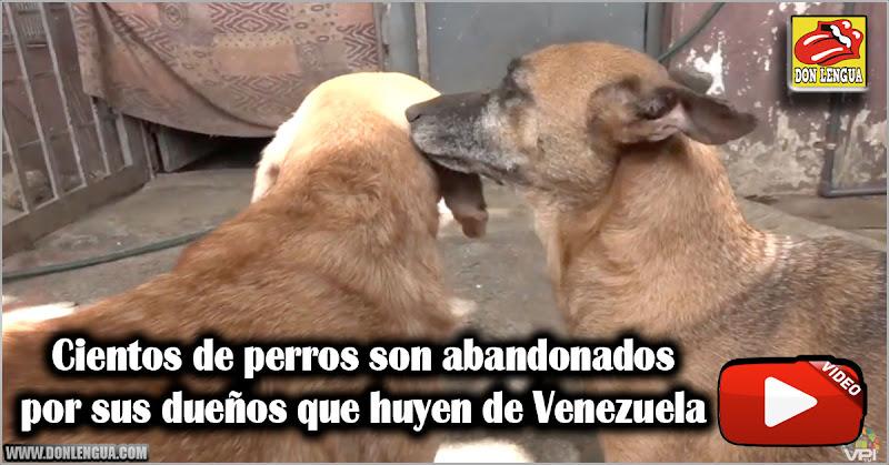 Cientos de perros son abandonados por sus dueños que huyen de Venezuela