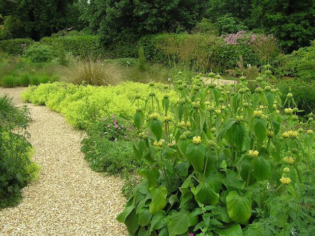 suchy ogród