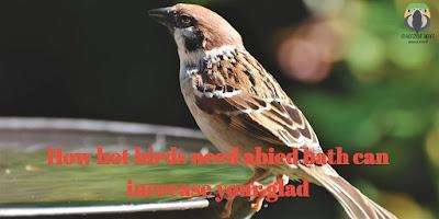 How Hot Birds   Need A Bird Bath Can Increase Your glad
