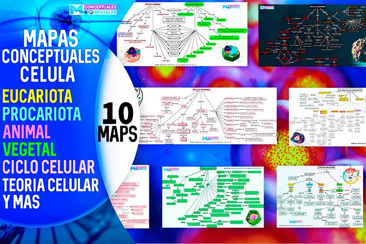 Mapas conceptuales de la célula, tipos, partes con sus funciones