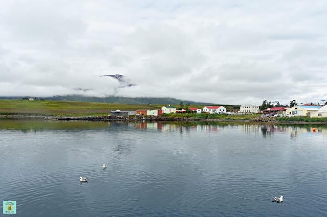 Avistamiento de ballenas en Hauganes, Islandia
