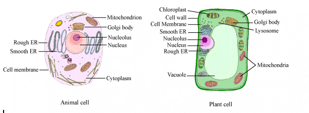 Cie A Level Biology Notes Cell Structure