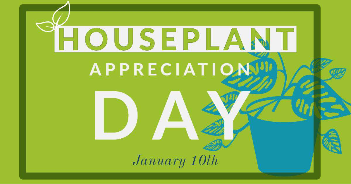 National Houseplant Appreciation Day Wishes Images download