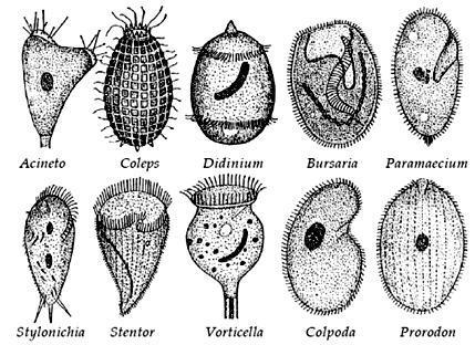 7000 Gambar Hewan Protozoa Gratis