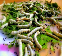 can bearded dragons eat silkworms?