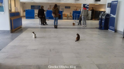 koty na lotnisku Mykonsos
