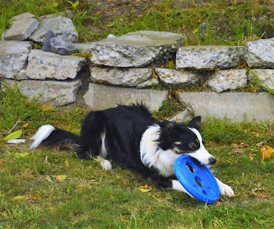 Durable foam frisbee