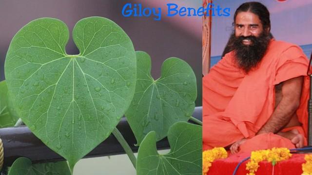 Giloy benefits - गिलोय के फायदे