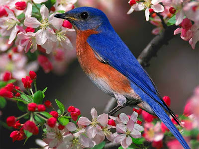 صورة طائر جميل على غصن ملون بأجمل الازهار