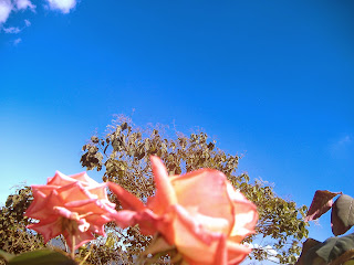 Le regalo esta rosa de paz y unión..Asesoria Inmobiliaria + 58 04123605721