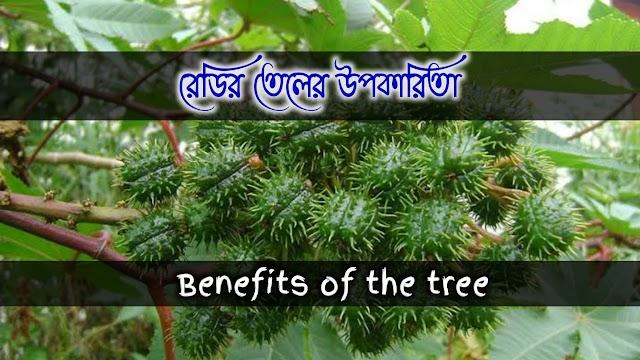 এরণ্ড(রেডির তেল) এর বনৌষধি গুনাগুন ও উপকারিতা- Herbal properties and benefits of castor oil