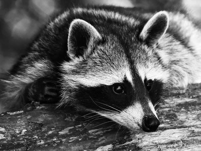 Деятельность приютов для животных