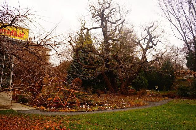 MyTravelnotes.Ru - Ботанический Сад в Праге