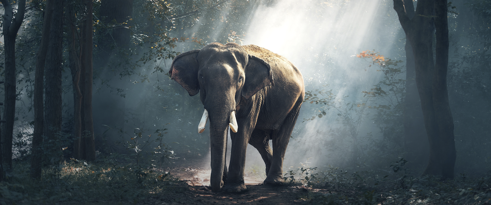 ELEPHANT WALLPAPER ULTRA WIDE