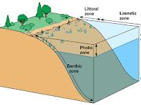 Yuk Menjelajah Bioma Perairan_Ekosistem Danau
