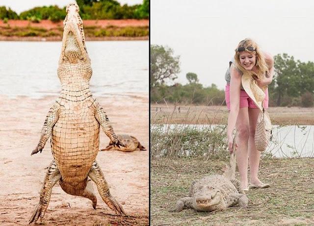 Người dân ở ngôi làng kì lạ sống cùng hàng trăm con cá sấu 5