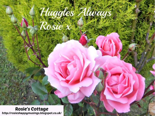 Huggles Always, Rosie x