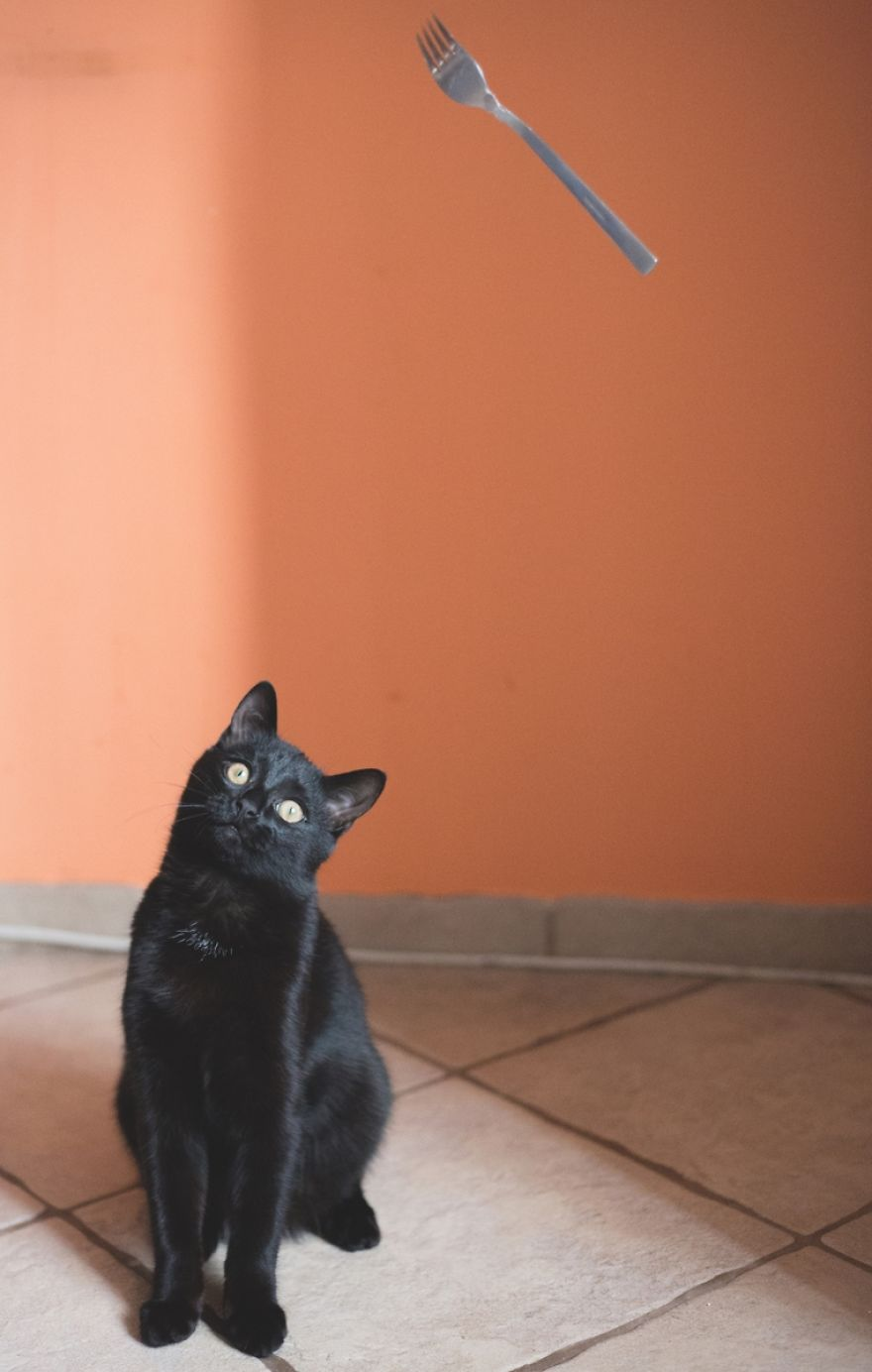 Black Cats Don't Have Anything To Do With Bad Luck