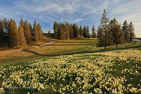 Frühlingsbilder, COVID-19 und . . .