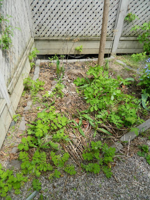 Toronto Spring Backyard Garden Cleanup Cabbagetown Before by Paul Jung Gardening Services a Toronto Gardening Company