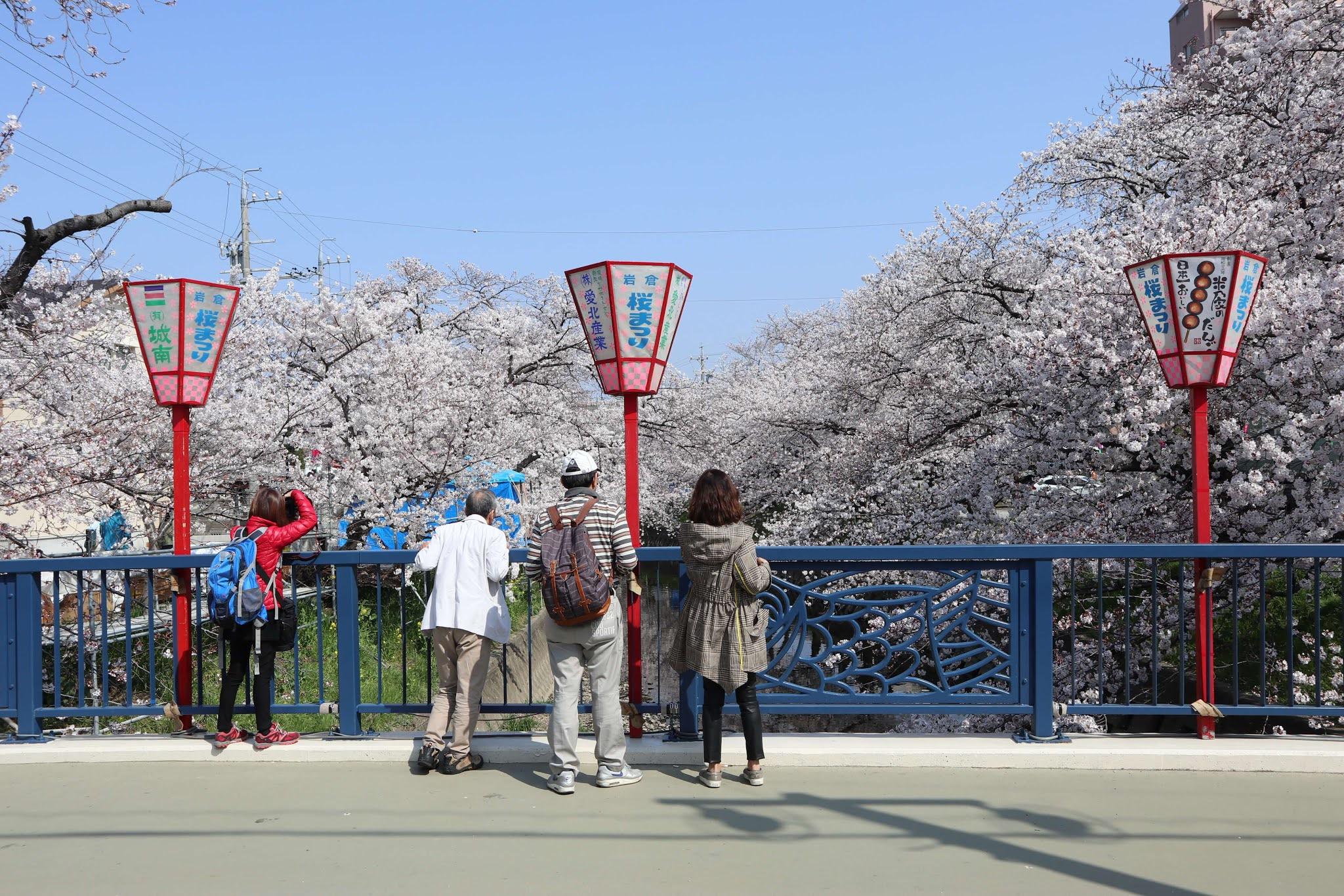 岩倉桜まつり5