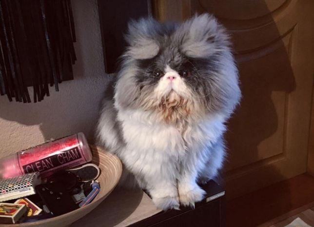 25 Ridiculously Fuzzy Animals That Will Crush Your Mind