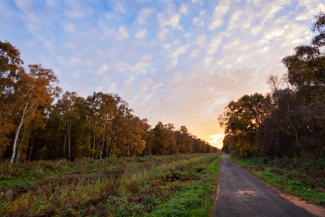 Natural England nature reserve at Holme Fen with country lane at sunset