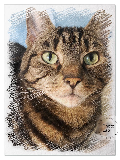 Colour sketch of tabby cat for Caturday Art