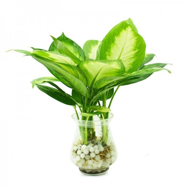 Nên trồng cây gì trong văn phòng làm việc hợp phong thủy?