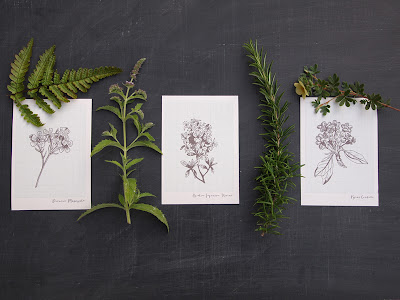 A6 botanical notelet cards from shop.alfies-studio.com