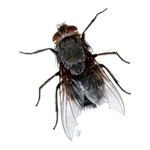 fly in spanish