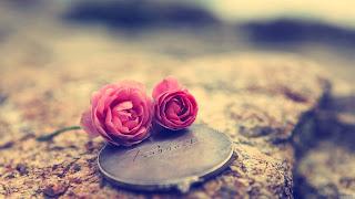 صورة غلاف فيس بوك وردة رومانسي
