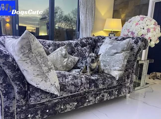 Mum Shares Photos Of Her Dogs Camouflaged Into Her Velvet Sofa
