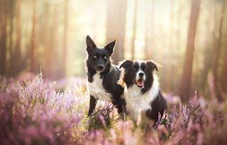 Hayvanlar İle İlgili Ata Sözleri, Hayvanlar İle İlgili Cümleler, hayvanlar ile ilgili etkileyici sözler, hayvanlar ile ilgili güzel sözler, hayvanlar İle ilgili kısa sözler, Hayvanlar İle İlgili Mesajlar, Hayvanlar İle İlgili Sözler Facebook, Hayvanlar İle İlgili Sözler Tumblr, hayvanlar İle ilgili uzun sözler, hayvanlar ile ilgili yazılar, Hayvanlar sözleri anlamlı