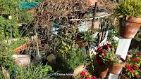Growing plants in pots - Diamond Head Community Garden, Waikiki, HI