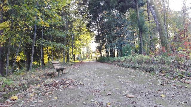 Banco de jardim, folhas secas, árvores,