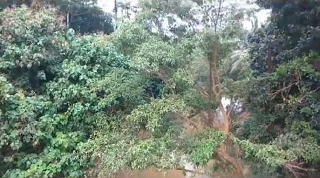 Cai Changpan Gantung Diri di Hutan Belantara, Cuma Bisa Dilewati Trail