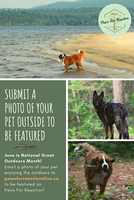 June is National Great Outdoors Month: Submit your pet to be featured