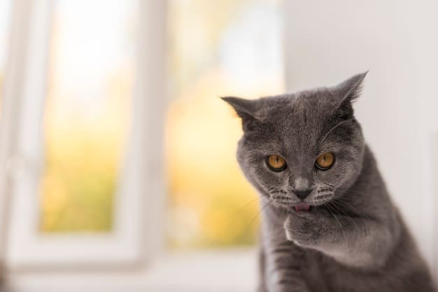 Tips About Cats
